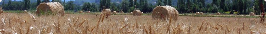 Attrezzi per agricoltura for Attrezzi per innesti